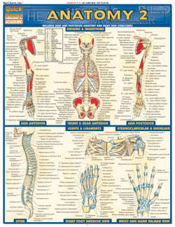 Image For ANATOMY 2