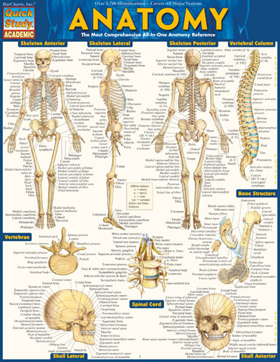 Image For ANATOMY